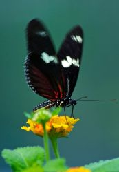 Butterfly by rontz