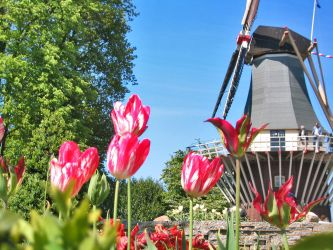 Windmill and Tulips by jvohome