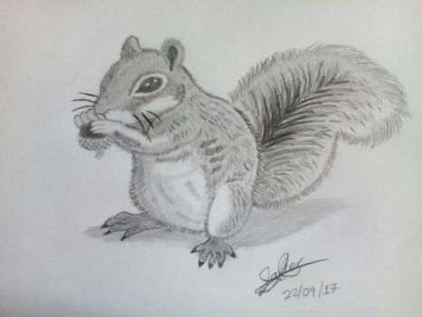 Squirrel, my first drawing of this beautiful by Raziel993