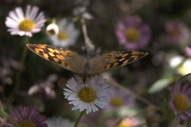 Butterfly by wasge