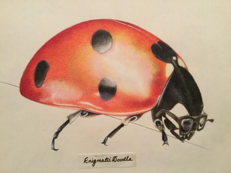 Hipster Ladybird by EnigmaticDoodle