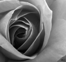 Rose by LauraHolArt