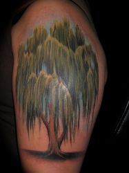 willow tree by bobeck