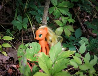 Apple Jack Among the Leaves by AquilaTEagle
