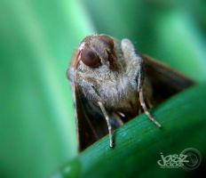 Mothcro by iamjasz