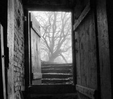 Open door to the foggy park by Maresolo