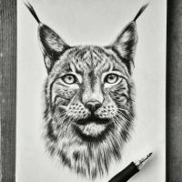 Luchs by aquacobalamin