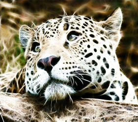 Fractalius baby leopard by mconev