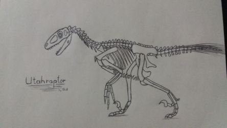Utahraptor Skeleton by MareleLup