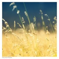 meadow by guality