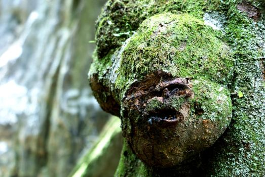 A face in the woods by BenJuarez