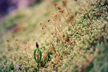 moss and fungus by ciseaux