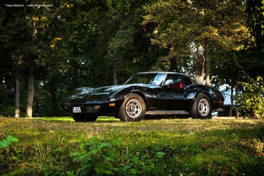 1979 Corvette C3 - Shot 6 by AmericanMuscle