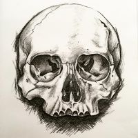 Skull in pencil by usmelllikedogbuns