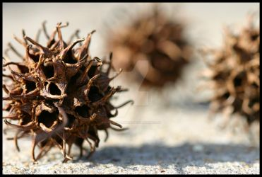 Sweet Gum I by Twilight-Lament