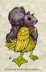 Squirrel Duck by racehell