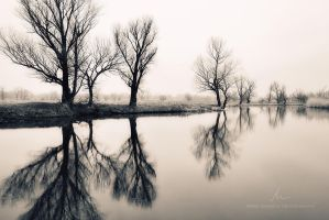 Mirror effect by markborbely