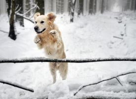 Snow Jumping by Nikki-vdp
