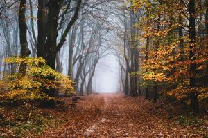 The Fringe of Fall by tvurk