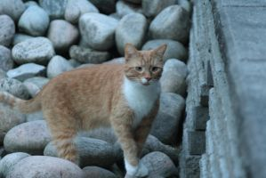 Wall-eyed kitty by ringette-and-riding