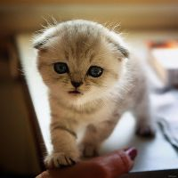 curious kitten by Bobbyus