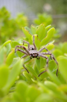 spider that sat on a plant5 by vjs