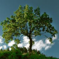 tree by maticgolob