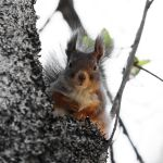 Squirrel by Aredelsaralonde