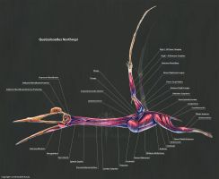 Quetzalcoatalus Northropi Muscle Study by TheDragonofDoom