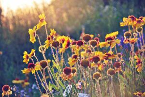 summer flowers by Holunder