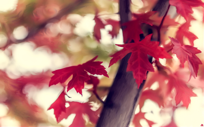 Indian Summer by muck1