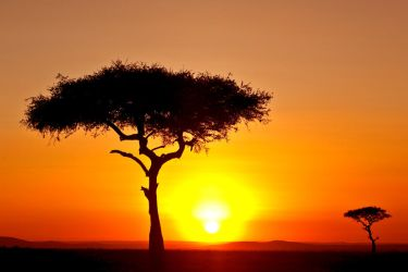 My Africa 25 by catman-suha