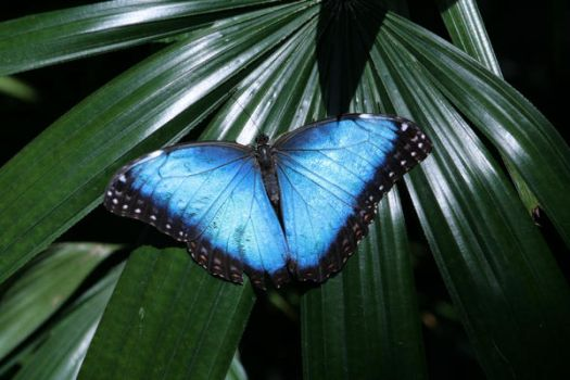 'Blue Winged Beauty' by SuzyQ54