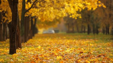 Autumn yellow leaves HD Live Wallpaper by SmithJerry