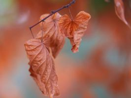 Autumn leaves. by wfpronge