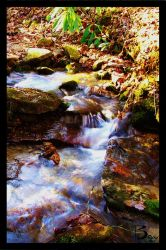 The Stream by Baxy77