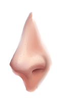 Freckled Human Semi-Realism Nose [ Practice ] by Laetusmua