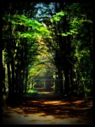 Forrest path by simoner