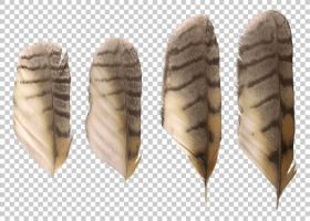 Long-eared owl feathers PNG by raduluchian