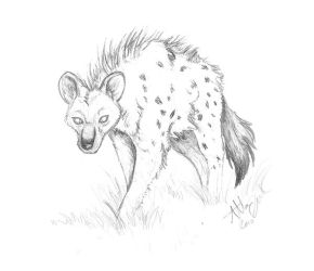 10. Hyena by Marcynuk