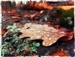 Drop of autumn water. by Bellelina-64
