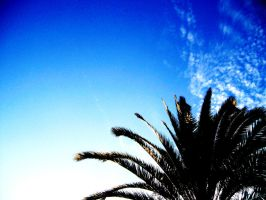Palm And The Sky by jennynm