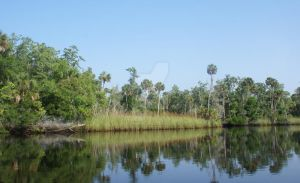 Eastern Bank of the Aucilla River by annehawholt