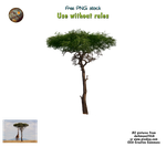 african tree PNG stock by darkmoon1968
