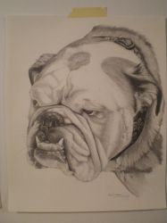 Bulldog portrait 1 by 71Charger