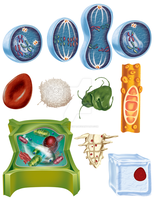 Biology Illustrations by SavarkDicupe