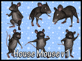 House Mouse v1 by Stock-by-Dana