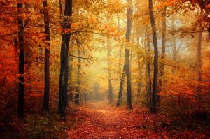 Autumn Walk XLV. by realityDream