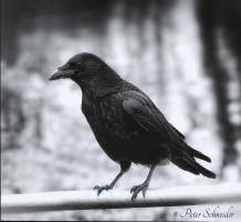 Nevermore. by Phototubby