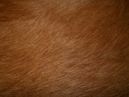 Golden Retriever Fur Texture by Orangen-Stock